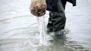 видео: Железный порт 18.02.2012. Как ловят рапанов . . .