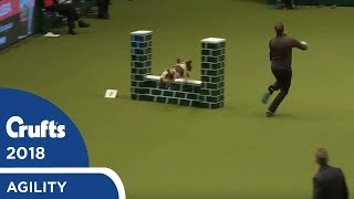 Agility - Crufts Large Novice & Medium ABC Final (Jumping) Part 2 | Crufts 2018