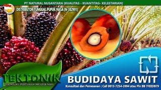 Tutorial Cara Budidaya kelapa Sawit Cepat panen Melimpah tanpa trek bag.3-pupuk organik Terbaik