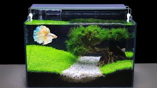 How To Grow Aquatic Plants In Aquarium Amazing Diy Aquascape For Betta Fish No Co2 Have Filter Youtube