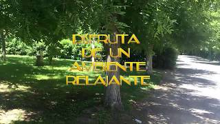 Camping Río Turia
