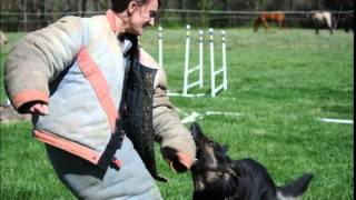 Learn To Train Police Dogs