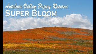 Antelope Valley Poppy Reserve Super Bloom 2019