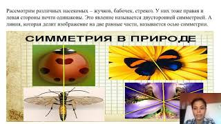 Художественный труд  Живая природа  Симметрия