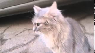 Уличная кошка Тыковка ищет дом или передержку.