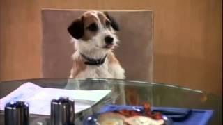 FRASIER Funny Clips  Best Of Frasier 6  Eddie's staring at me (123) Kootallica S01E02