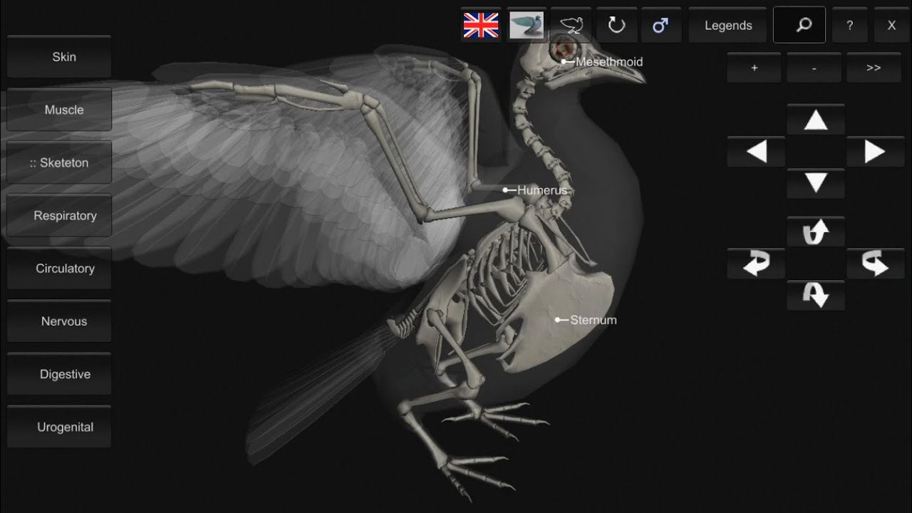 3D Bird Anatomy Software for Mobile Devices - YouTube