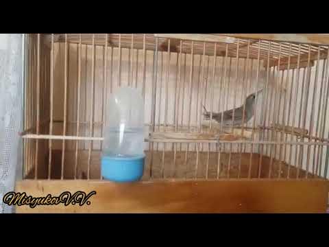 Отзыв о полученных птицах