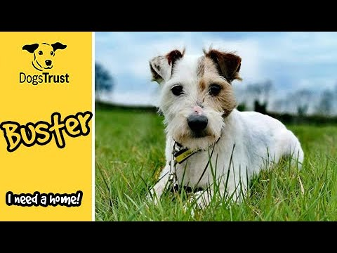 Meet Buster, The Live Wire Terrier! | Dogs Trust Ballymena