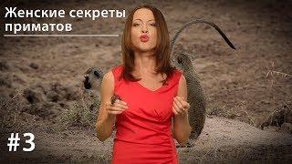 Женские секреты приматов: 8 марта и скрытая овуляция // Все как у зверей #3