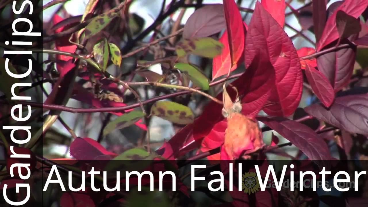 6 plants for autumn fall and winter interest in the garden youtube