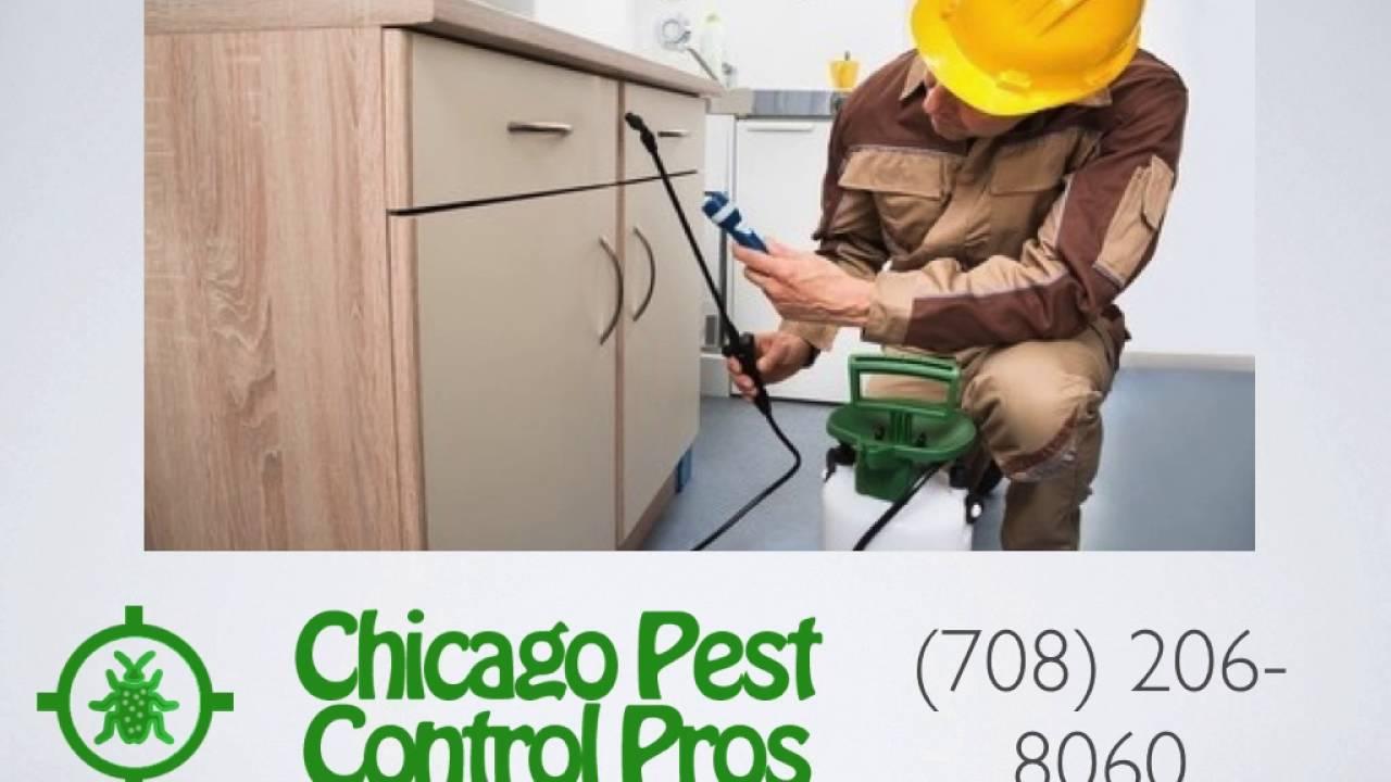 Chicago Bed Bug Exterminator   Chicago Pest Control Pros