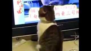 кот смотрит телевизор!