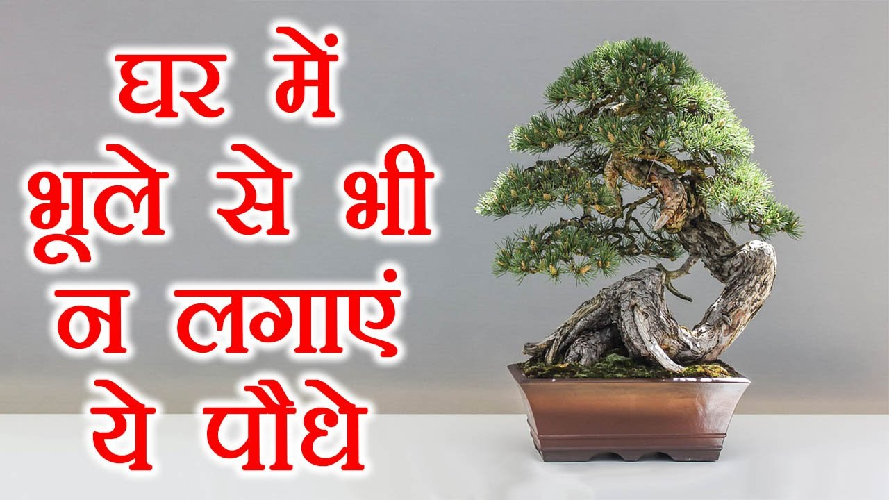 Plants That Bring Bad Luck In Your Home घर क तरक क