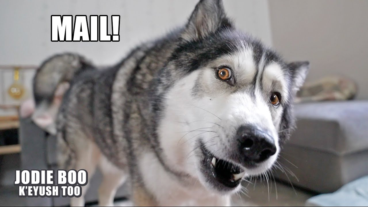 Husky Says MAIL Perfectly!