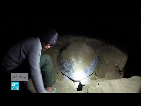 جزيرة جاوة الإندونيسية: رعاية خاصة لصغار السلاحف  - نشر قبل 4 ساعة