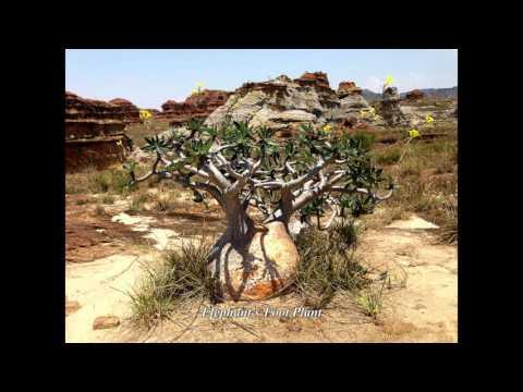 19 Madagascar -  Ranohira,  Isalo Natiolal Park - Part Three