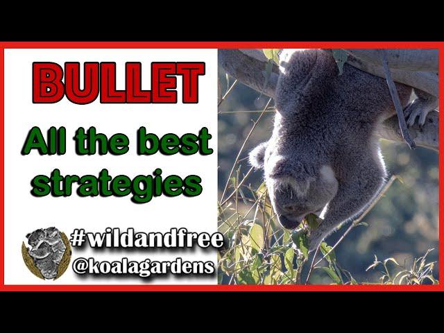 Bullet - wild koala decisions