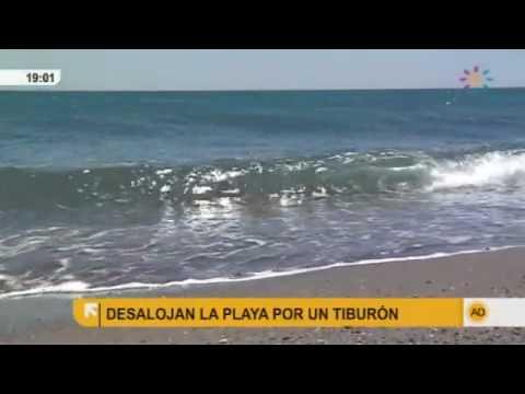 playas espana tiburones