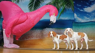 Dog vs Giant Flamingo Prank: Funny Dogs Maymo & Potpie