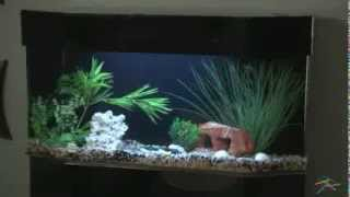 Uniquarium-flat-back Hexagon Aquarium And Stand - Product Review Video
