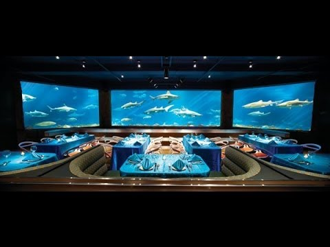 restaurant sharks underwater grill sea world orlando hd - Underwater World Restaurant