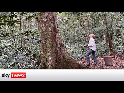 Gabon calls for financial rewards to help protect the rainforest