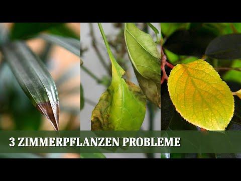 Die 3 Häufigsten Zimmerpflanzen Probleme Und Ihre Ursache - Blattfall, Braune Spitzen, Gelbe Blätter