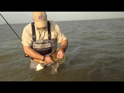 Wade Fishing In The Salty Shallows Of Baffin Bay