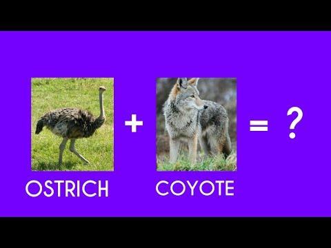 Ostrich + Coyote = ? | OCtober Challenge