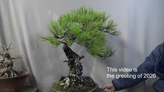 2020 Happy new year The Bonsai greeting from Japan