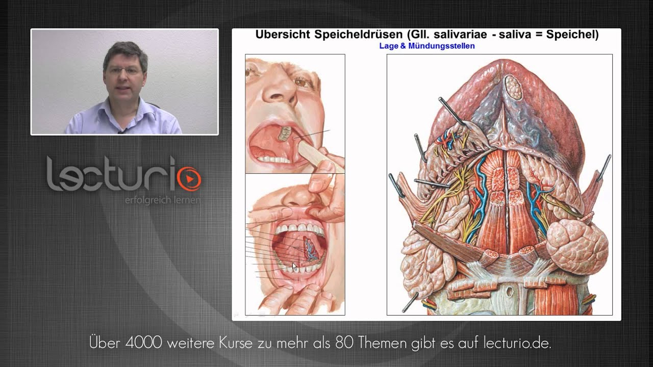 Die Mundhöhle: Speicheldrüsen, Zunge und Zähne | Dr. Steffen-Boris ...