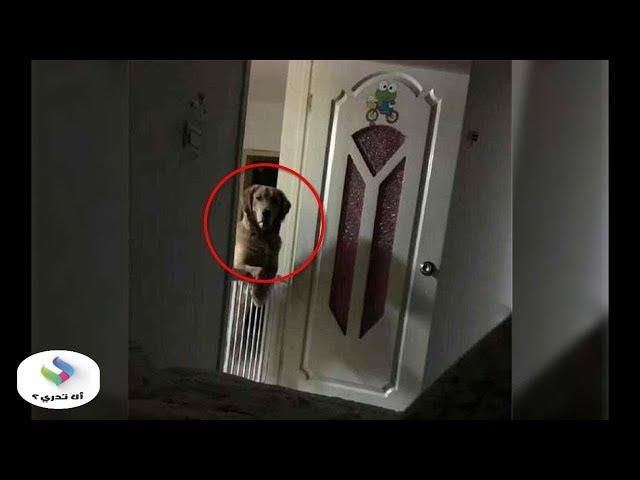 لاحظ هذا الرجل أن كلبه يراقب منامه كل ليلة..  وعندما تحقق من الأمر كانت المفاجأة سبحان ﷲ...!!!