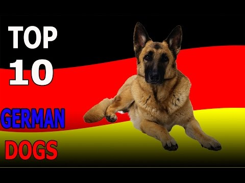 Top 10 GERMAN dog breeds | Top 10 animals