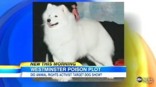 Westminster Dog Dead, Rat Poison Suspected    Dog's Death After Westminster