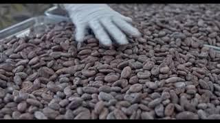 카카오로 만드는 수제 초콜릿