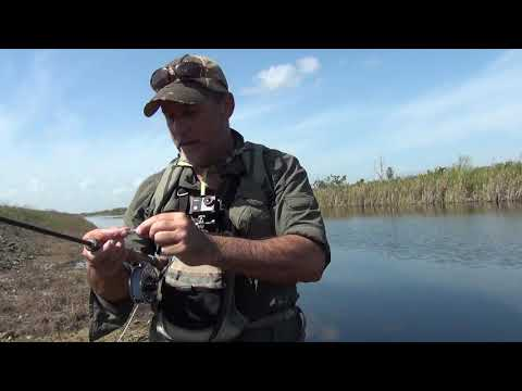 Fly Fishing For Peacock Bass In Florida