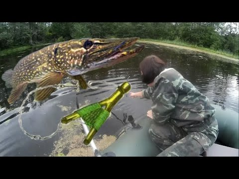 Летняя ловля щуки на жерлицу