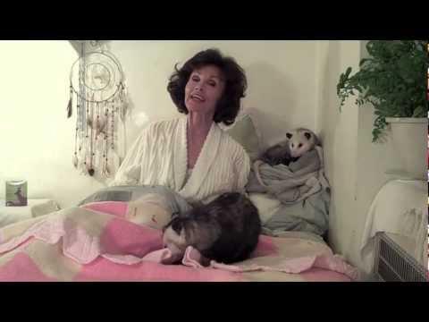 Proper Opossum Bedtime Story