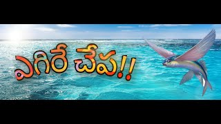 Flying Fish!! | అసలు చేపలు ఎగురుతాయా? | SK STUDIOS | with English Subtitiles