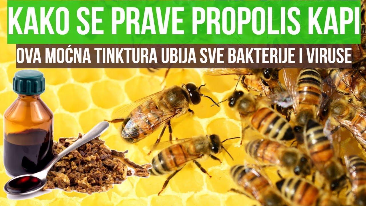 Gyertyák propolis- el a prosztatitis receptből)