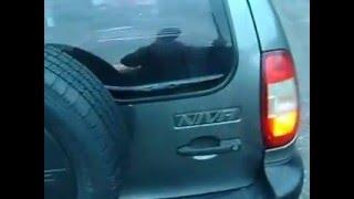 видео Общий обзор двигателя автомобиля Шевроле Нива