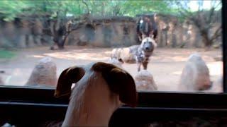 Bezdomne Zwierzęta Pierwszy Raz Spotkały Zwierzęta z Zoo