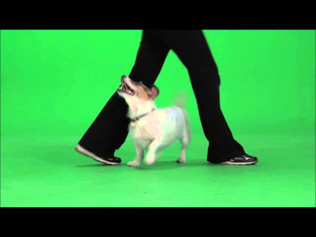 35 Amazing Cute Dog Tricks performed by Jesse