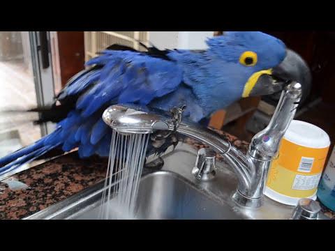 Miss Iris the Bird Taking a Bath