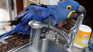 miss iris the bird taking a bath