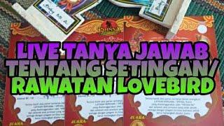 [LIVE]-TANYA JAWAB TENTANG SETINGAN & RAWATAN LOVEBIRD