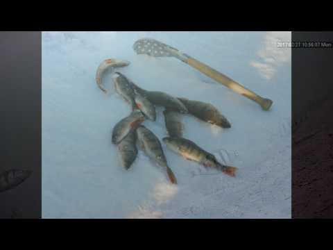 Рыбалка в чите видео