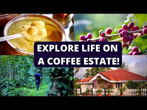 LIFE ON A COFFEE ESTATE IN KARNATAKA | Coffee, From Bean To Cup |Five Generations Of A Coffee Family