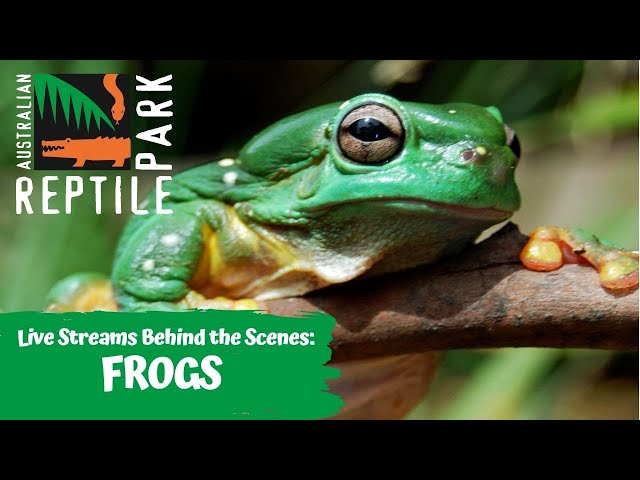 LIVE WITH FROGS   AUSTRALIAN REPTILE PARK